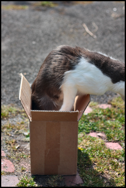 IMG_1759-eric-blind-cat-competition-climbing-out-box-smaller.jpg