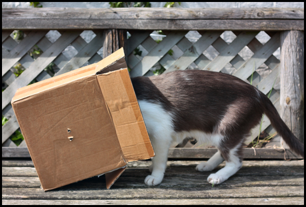 IMG_1759-eric-blind-cat-competition-the-box-entry-smaller.jpg